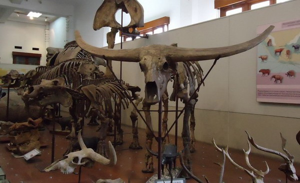 museum geologi bandung tempat wisata yang menarik di bandung