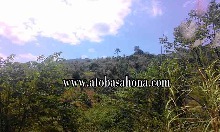 Hutan, Jenis Hutan dan Manfaatnya