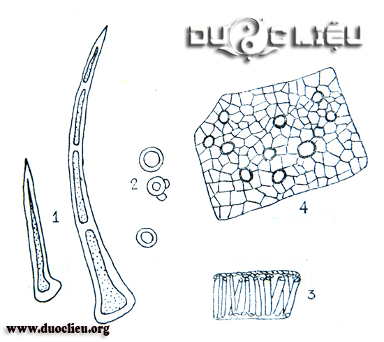 Một số đặc điểm bột Ích mẫu