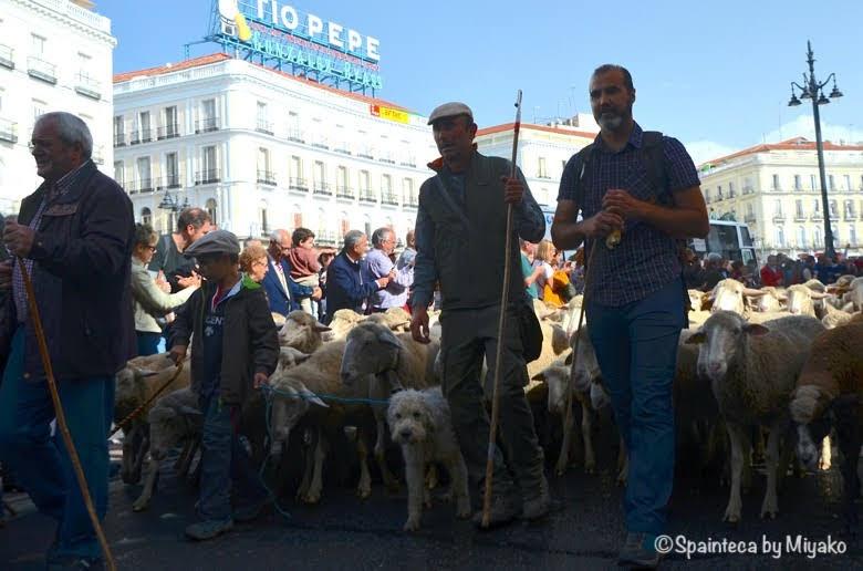 Fiesta de la Trashumancia Madrid  マドリードのソル広場に通る1500頭の羊の行進