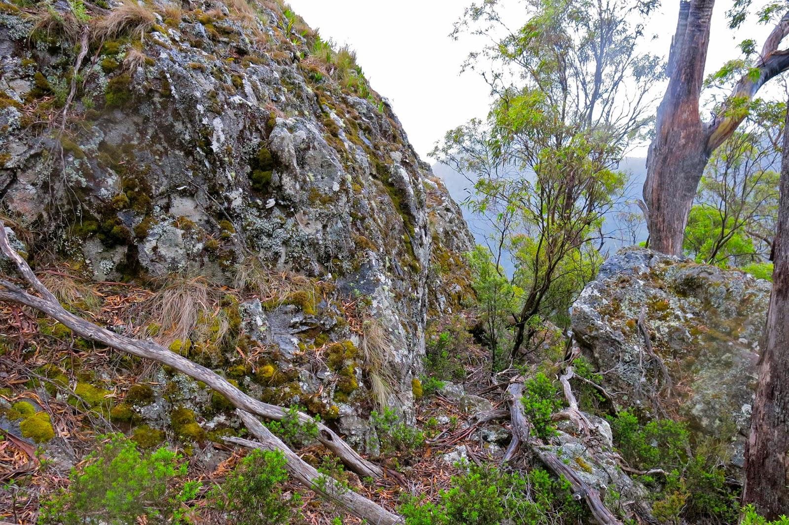 Mt Gnomon | Natureloverswalks