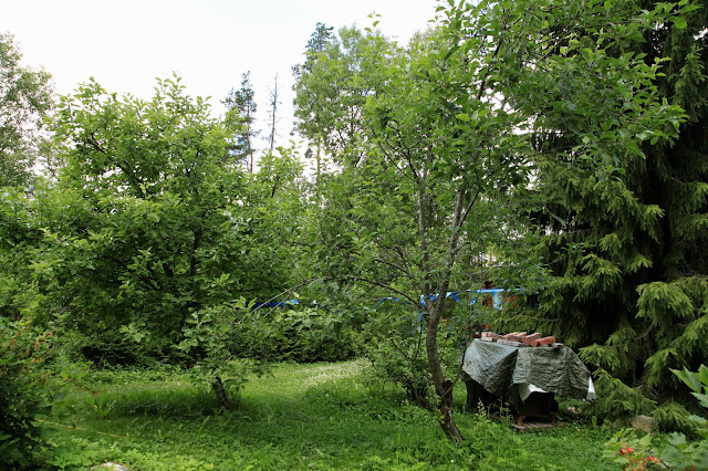 omenapuut kaipaavat leikkausta