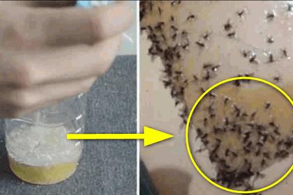 """Pusing Nyamuk di Rumah Gak Habis-habis? Taruh """"Campuran Bahan Ini"""" Diujung Kamarmu, Dijamin Nyamuk Bakal Mati Sampai Tuntas"""