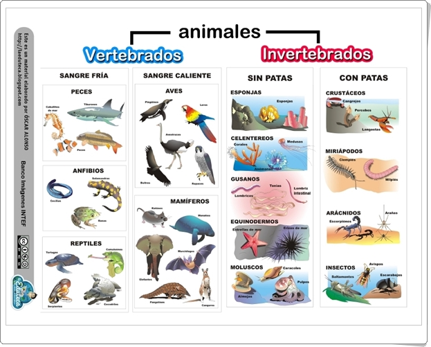 """""""Animales vertebrados e invertebrados"""" (Infografía de Ciencias naturales de Primaria)"""