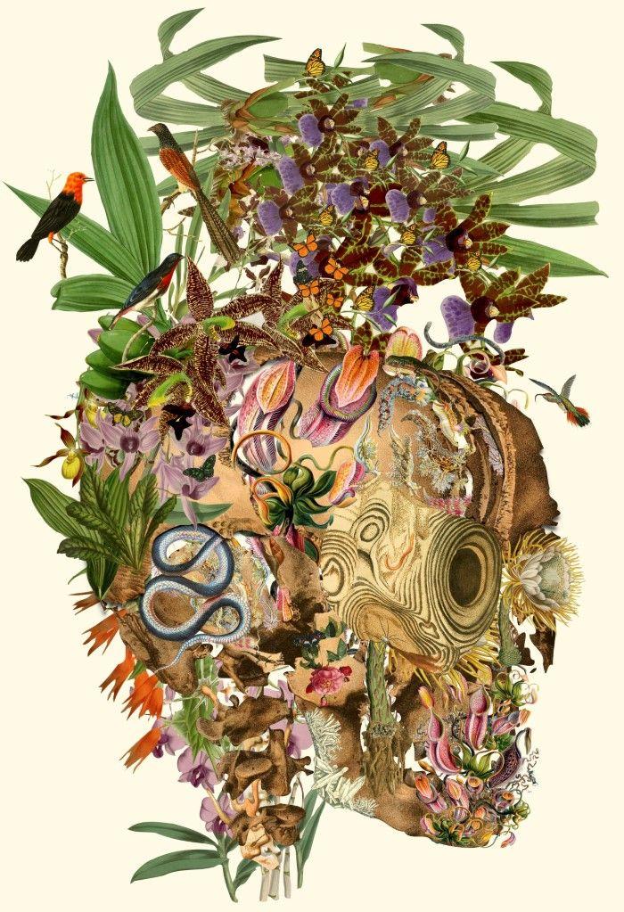 Биологические изображения. Travis Bedel (коллаж)