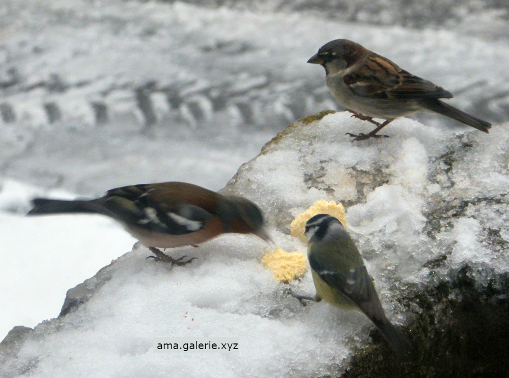 Drôles d'oiseaux par Ama sculpteur à Vergons, Alpes de Haute-Provence