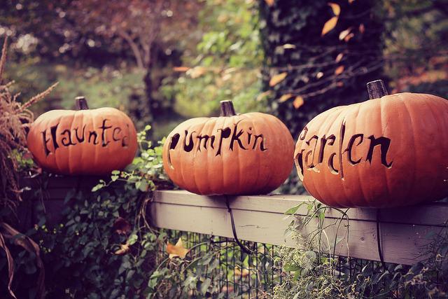 Carved-Pumpkin-Garden