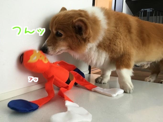 オレンジレンジャーと風太07
