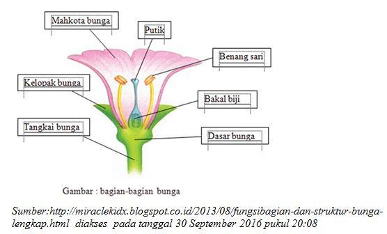 Belajar Bersama Pak Guru Tri Struktur Bunga Dan Fungsinya