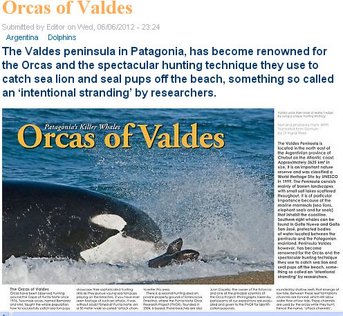 Orcas of Valdes Peninsula new article in new season