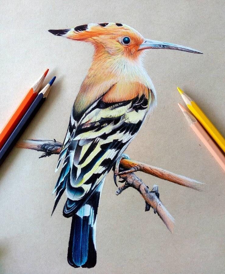 10-Bele-Birds-Drawings-www-designstack-co
