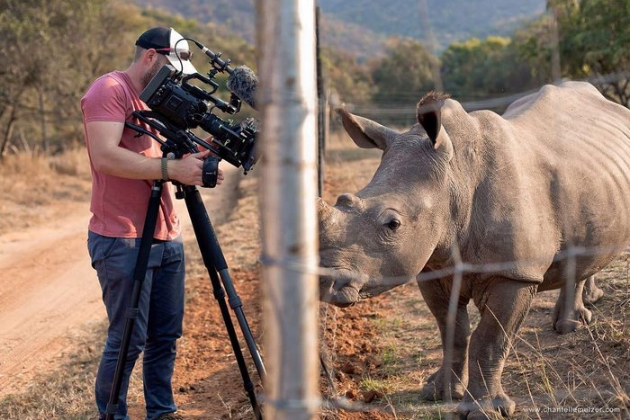 Incredible! Wild Rhino Approaches Cameraman And Demands A Belly Rub [Watch]
