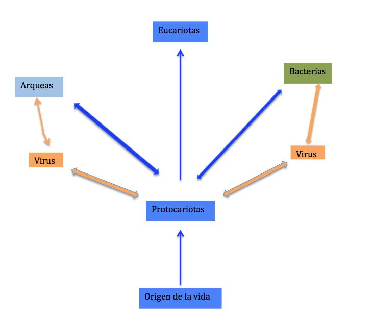 Estructura E Información Biológica Origen De La Vida Y