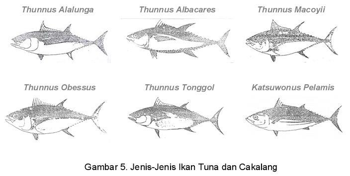 Gambar Ikan Kandungan Gizi berbagai macam Ikan dalam 100 gram