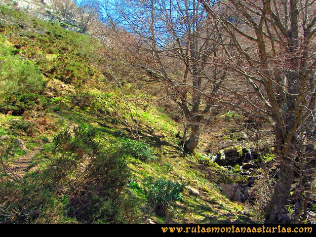 Ruta al Campigüeños y Carasca: Atravesando hayedo camino a Valloseru