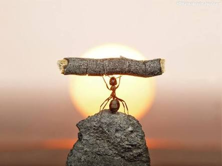 Ant with a log , hard work , success, millionaires , billioniares