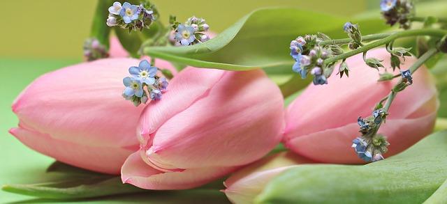 hoa tulip dep nhat 3