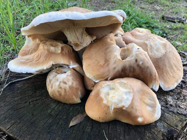 Ciclo de vida dos Cogumelos