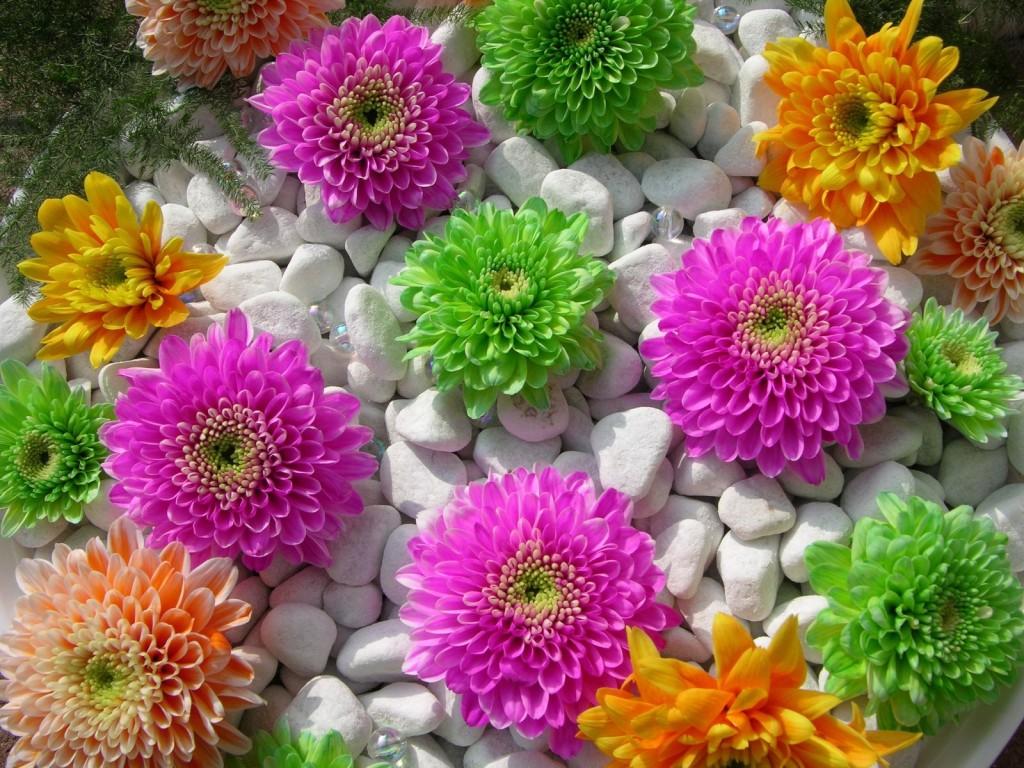 Maprox HD: 20 Beautiful Flowers Wallpapers ...