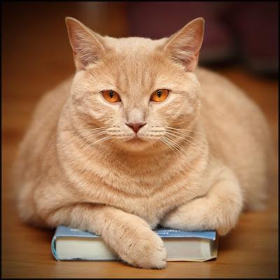 Cat Owners' Cat Training Books