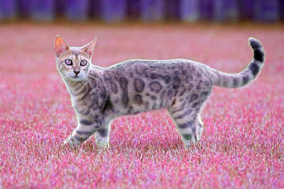 imagenes de un gato