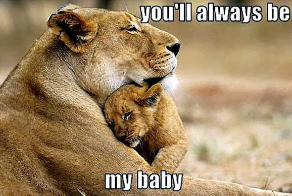 Funny animals with you'll always be my baby lion cub.
