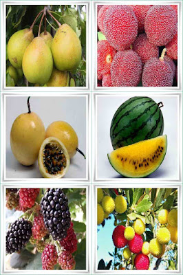 Fruit Names Beginning With Y