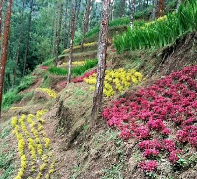wisata bendina hills purbalingga