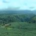 Land Preparation for Banana Cultivation - Part I || Banana Cultivation