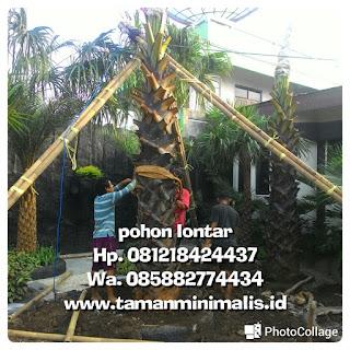 Palm lontar murah