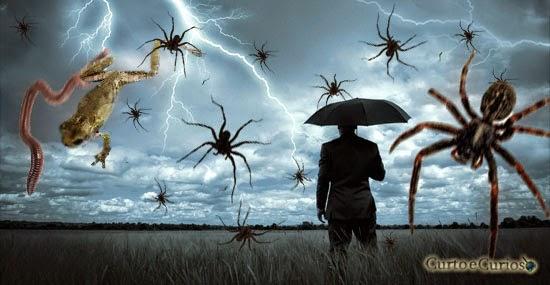 Chuva de animais: o bizarro fenômeno dos bichos que caem do céu