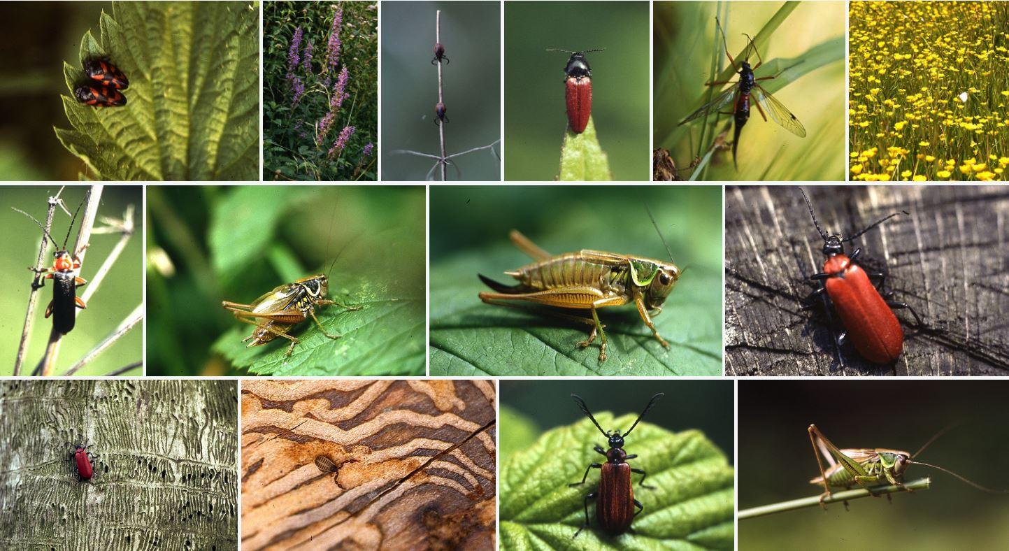 Popular Entomology Books