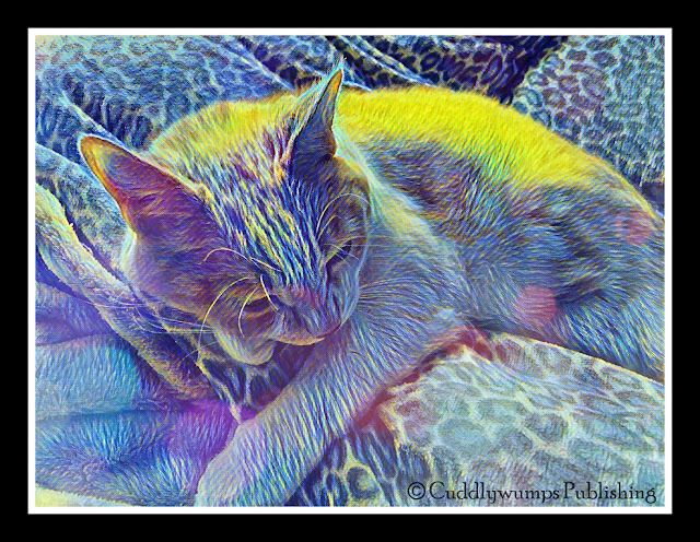 Real Cat Webster_starry 2 effect #caturdayart #lunapic