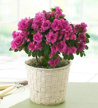 Lo básico para cuidar tus flores y plantas en Agosto 1