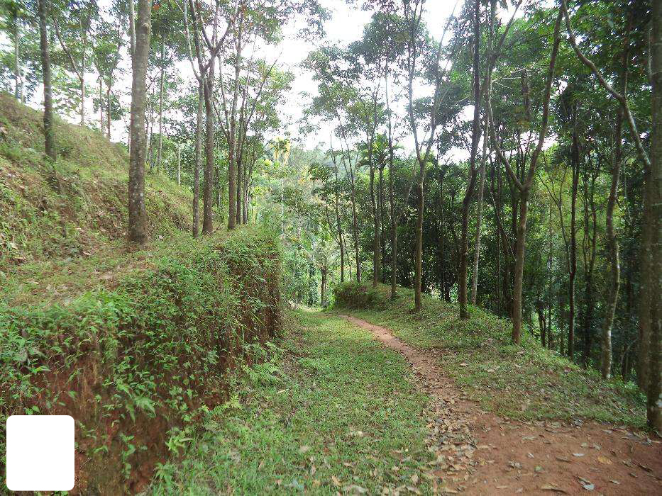 Mananthavady 5 acre plot for sale Ph: 919562720812 | REAL ESTATE