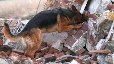 cães de salvamento
