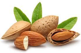 almond(badam) health benefits in urdu