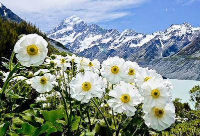 Gambar Flora Bunga di Pegunungan Salju Wallpaper HD