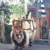 Tari Barong Tarian Tradisional Pulau Bali
