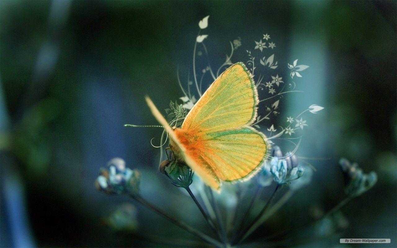 butterfly hd beautiful wallpaper