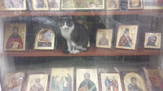 Cat, Shop Window, Not For Sale, Yambol,