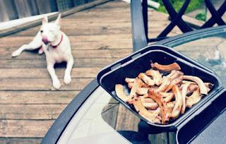 Makanan Pitbull Supaya Cepat Besar dan Sehat