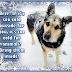 Μην αφήνετε τα ζώα στο κρύο....