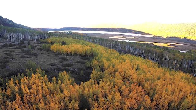 www.fertilmente.com.br - É uma única planta que forma todo um bosque, criando um ecossistema de um único indivíduo muito antigo, e muito grande.
