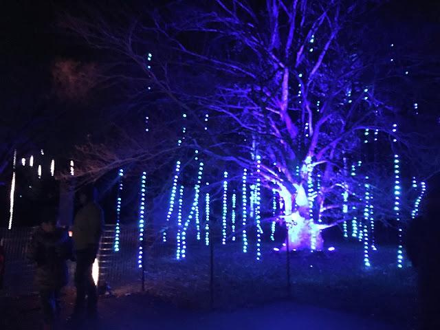 Tinsel trees a-glittering at Morton Arboretum