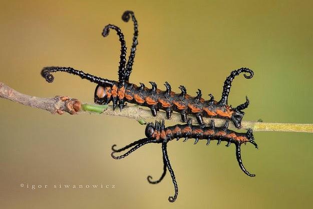 caterpillar-transformation-process-1
