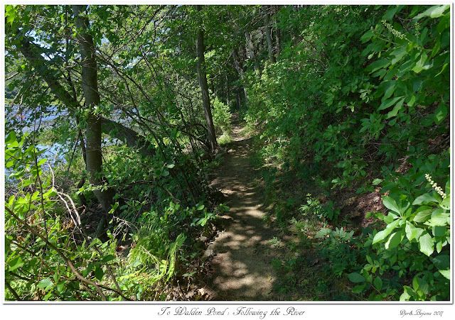 To Walden Pond: Following the River