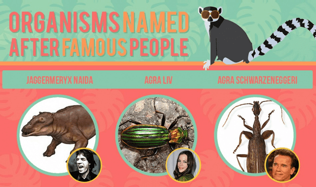 Organisms Named After Celebrities