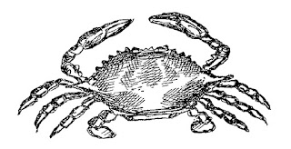 crab sea life image ocean clip art digital illustration