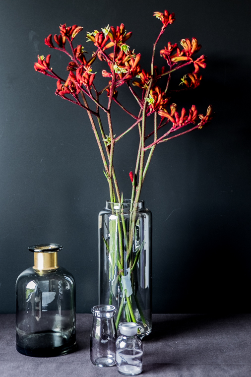 fim.works | Fotografie. Wortakrobatik. Wohngefühl. | Kängurupfoten in der Vase